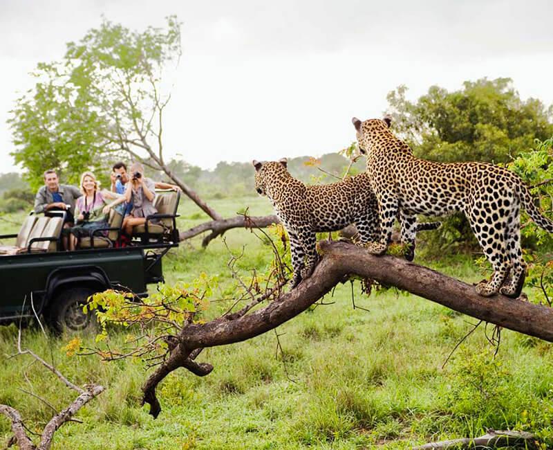 voyage golf afrique du sud big5 big 5 five safari